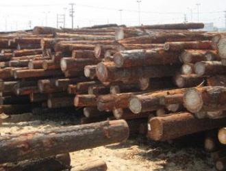花旗松木材和铁杉木材两者区别_花旗松木材和铁杉木材用途