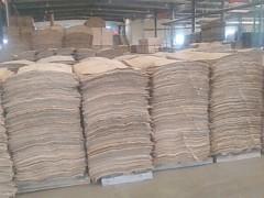 出售大量桦木单板 面皮