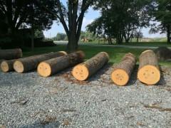 宾州产区红橡原木