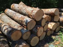 美国西弗吉尼亚州白橡原木