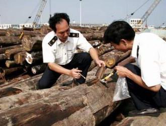 上海口岸从进口桉木中截获截面材小蠹属有害生物,系全国首次