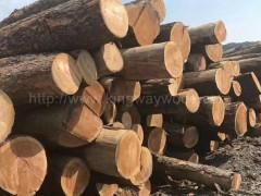 木业供应大量货源 美国樱桃木原木 实木 高档家具进口材