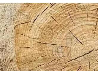 木材加工知识:木材干燥与应力
