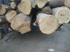 长期供应大量梧桐木榆木槐木杏木原木