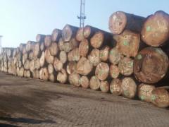 金丝柚木圆木任意规格定做厂家以及车圆加工费多少钱一米