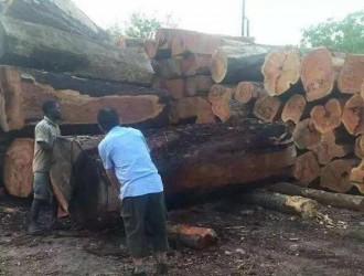 小巴花出货渠道或将顺利打通,上游木材原材料紧张压力或将得到缓解!