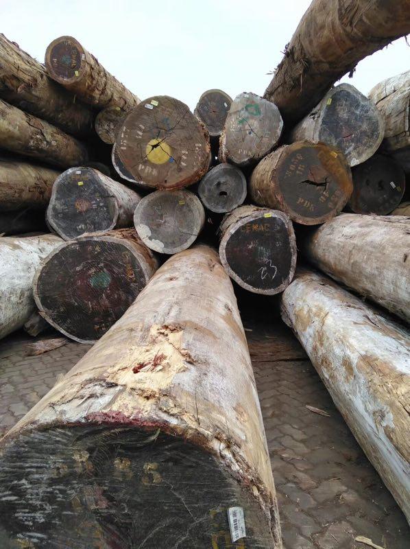 精品红花梨原木价格多少钱一立方米品牌