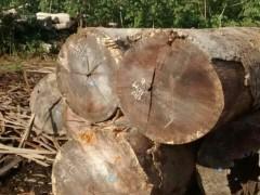 筷子用木 筷子专用木 进口原木 进口实木