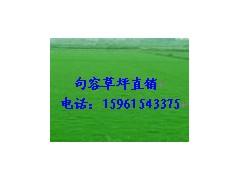 草坪,百慕大与黑麦草混播草坪,百慕大电15961543375