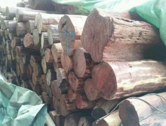 中国林科院木材所出具我国首份木材DNA鉴定报告