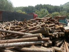 大量出售杉木原木