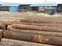 优质俄罗斯樟子松原木批发