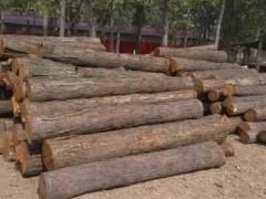 长期供应苦楝木,香椿木,槐木原木