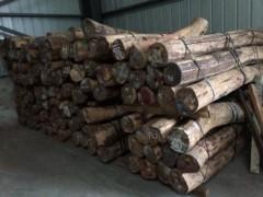 老挝红酸枝 交趾黄檀原木