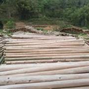 广东省茂名市润泽木业