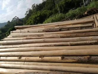 杉木原木_松木_杂木_杉木板材首选茂名市润泽木业自家园林