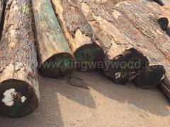 进口美国红橡原木 橡木 美式家居用材 环保材 装饰材