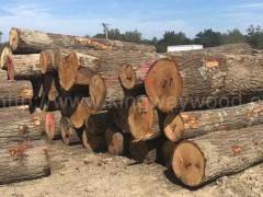 木业最新供应美国宾州北部红橡原木 美式家居材 床柜料
