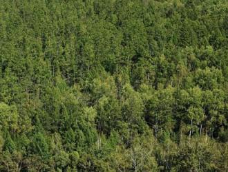 中国成为林业产业发展最快的国家