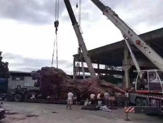 赵本山退休后专注于红木收藏