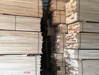 中国禁止进口白蜡树属属原木、锯材