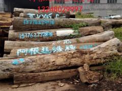 阿根廷绿檀原木大量新货到港