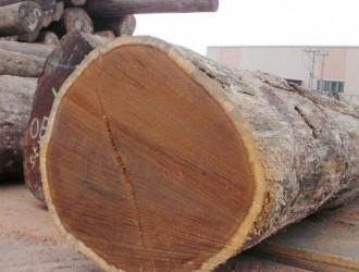 非洲的木材加工业面临原木短缺的局面