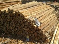 常年大量批发杉木原木