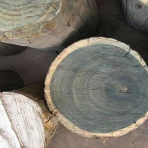 阿根廷进口绿檀原木