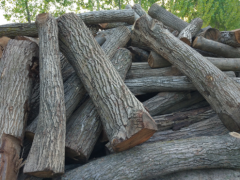 长期供应杜木山东香椿木苦楝木原木