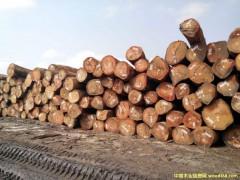 常年经营非洲材奥古曼、桃花芯原木