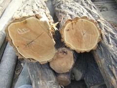 长期供应榆木苦楝木香椿木槐木原木