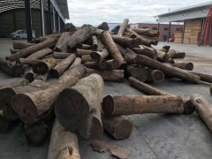 阿根廷去皮绿檀原木