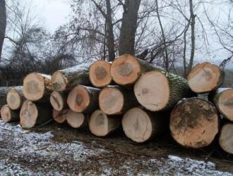 如何辨别白蜡木和水曲柳?选购实木家具技巧!