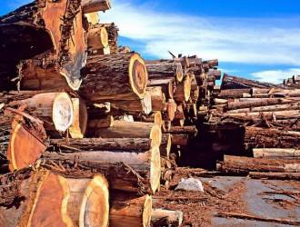 北美木材价格涨跌趋势不一致