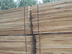 椿木烘干板材