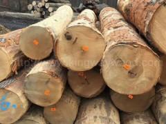 美国宾州进口去皮红橡原木美式家居材 可锯切板材专人验货