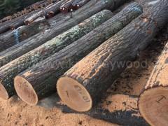 木业美国宾州白蜡原木红橡原木 2SC以上可刨皮大量批发