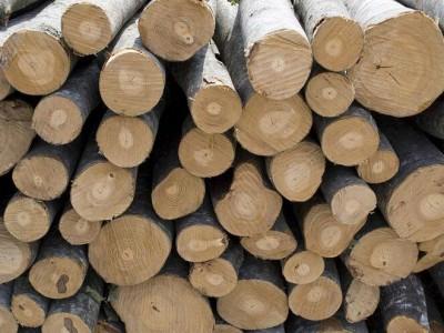 关于加强对塞尔维亚原木检疫监管的警示通报