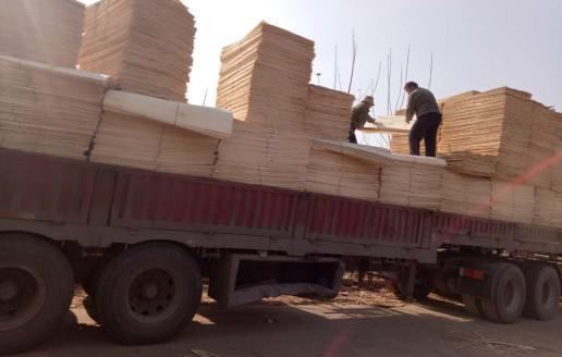 江苏徐州丰县杨木单板装车视频