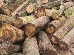板栗木,柞木