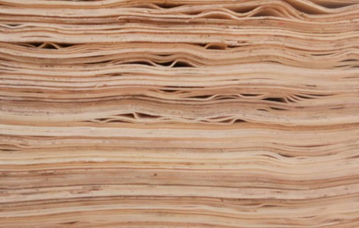 杨木单板生产视频