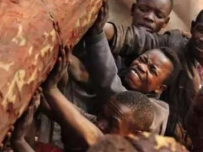 非洲木头有多值钱,非洲人为什么这么爱砍树?