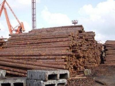 日本对外出口史上最大批量木材安全抵达江苏太仓