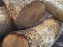 贵州金丝楠原木 楠木板材