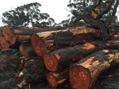 2017年太仓口岸全年进口木材1113万立方