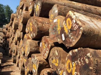 锯材市场行情:缅甸材库