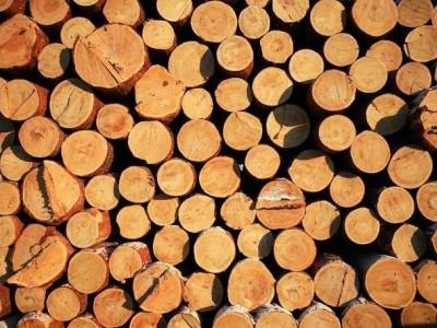 新年木材开局遇冷,市场氛围弱势趋稳