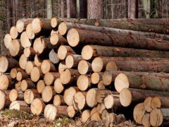 原木及原木加工