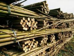 原竹及原竹加工